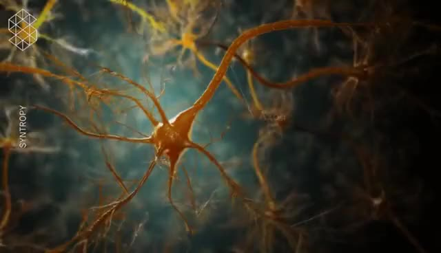 Watch and share Anatomy Of The Brain - Medical Animation GIFs on Gfycat