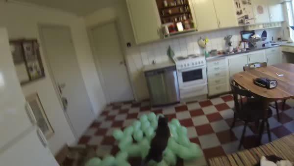 catpranks, holdmycatnip, thingsstickingtocats, balloon cat GIFs