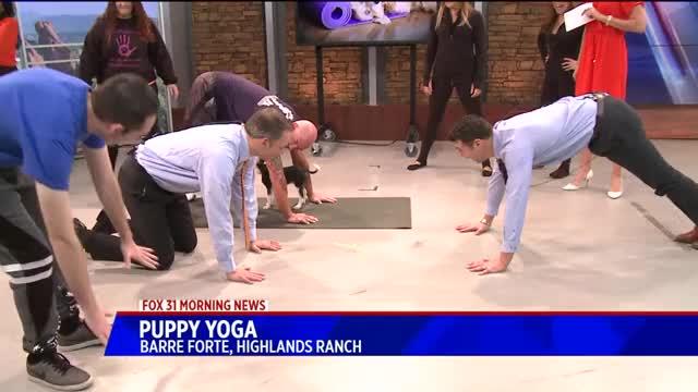 Watch Puppy Yoga GIF by PM_ME_STEAM_K3YS (@pmmesteamk3ys) on Gfycat. Discover more Nancy Melear, People & Blogs, lifeline puppy rescue, puppy yoga GIFs on Gfycat