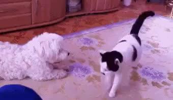 Watch and share Animalgifs GIFs on Gfycat