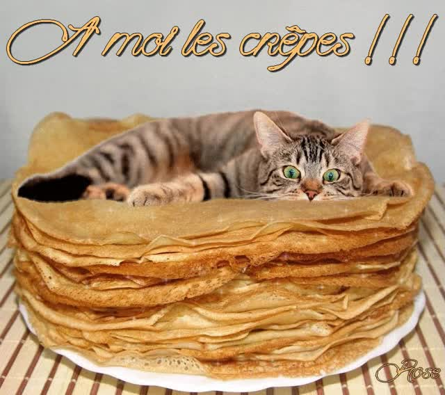 Watch and share Des Chats Et Des Crêpes GIFs on Gfycat