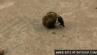 Watch and share Dung GIFs on Gfycat