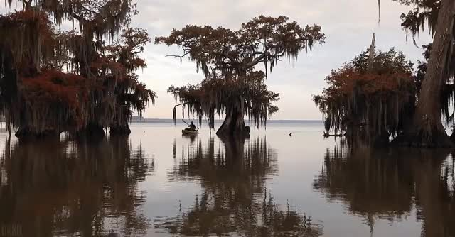 Watch and share Into The Cypress Swamps : Cinemagraphs GIFs on Gfycat