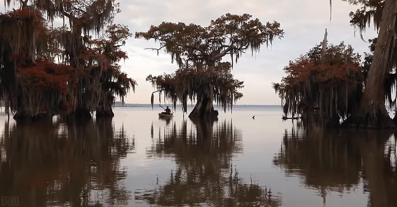 Into The Cypress Swamps : Cinemagraphs GIFs