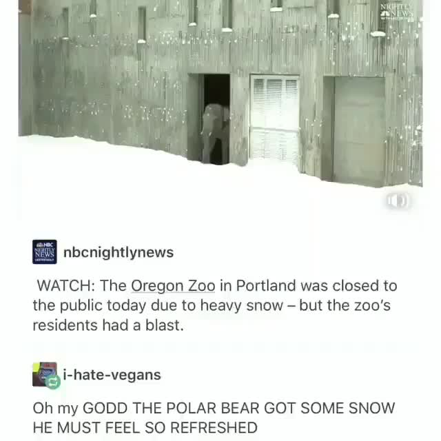 Watch and share Oregon Zoo GIFs and Polar Bear GIFs by MyNameGifOreilly on Gfycat
