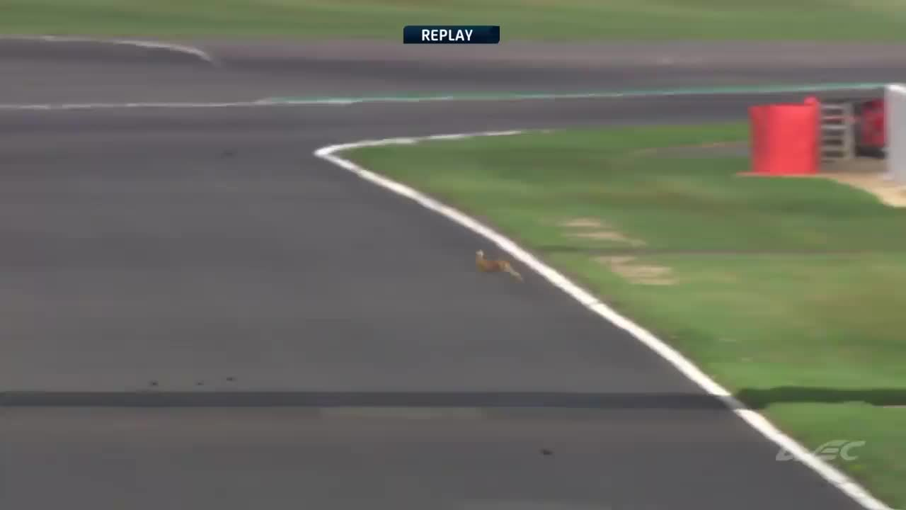 FIA WEC, This 🐇 has balls and he just loves racing!!! 😲😲😲 GIFs