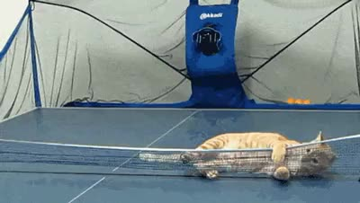Watch and share Ping Pong GIFs by meme_papa on Gfycat