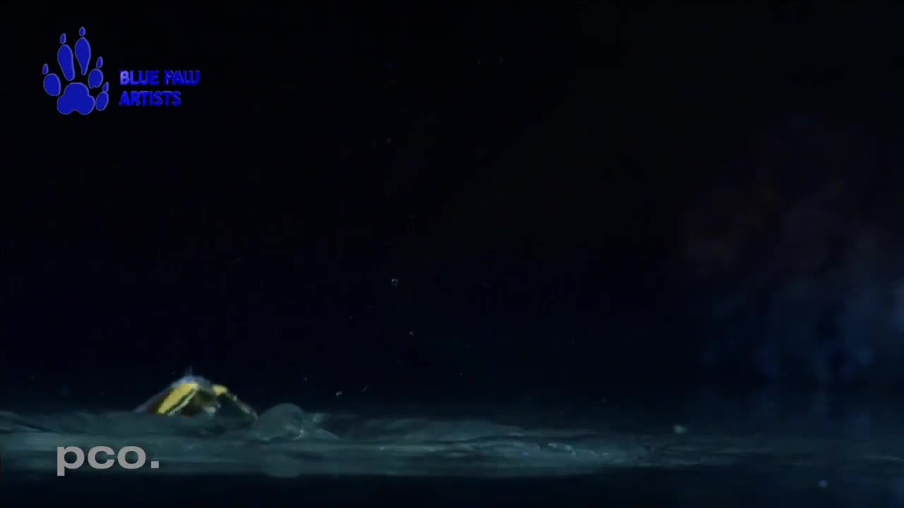 Bat catching prey on the water's surface GIFs