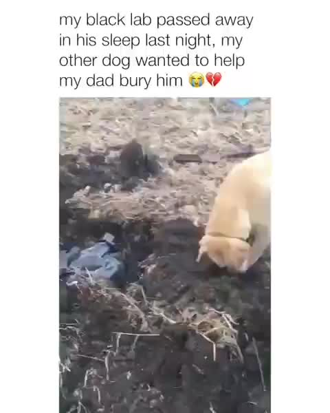 Watch and share Cutepuppies GIFs and Puppieslove GIFs by Master1718 on Gfycat