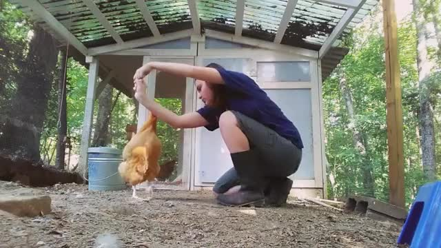 Watch and share Chicken Tricks GIFs and Bird Tricks GIFs by lnfinity on Gfycat