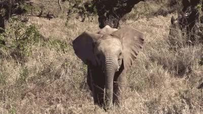 Watch 96 Elephants GIF on Gfycat. Discover more WorldElephantDay, animal gif, animals, baby elephant, cute gif, elephants, world elephant day GIFs on Gfycat