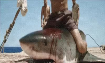 Watch Kon Tiki GIF on Gfycat. Discover more related GIFs on Gfycat