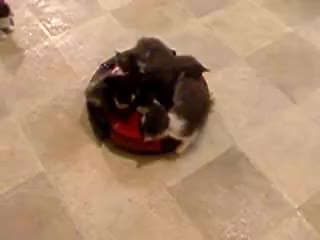Watch and share Roomba Kittens GIFs on Gfycat