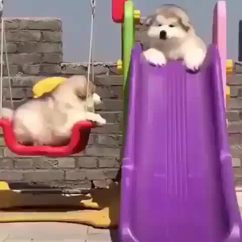 Floof does a slide GIFs