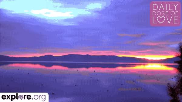 Watch and share Daily Dose Of Love GIFs and Mother Nature GIFs by Explore.org on Gfycat