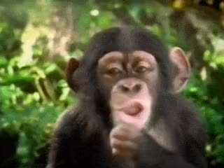 Watch and share Jane Goodall GIFs on Gfycat