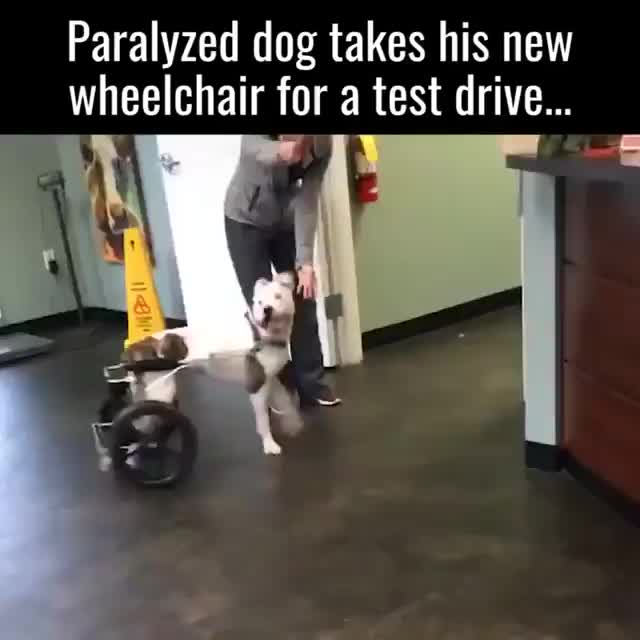 Watch and share Awwwww GIFs and Dog GIFs on Gfycat