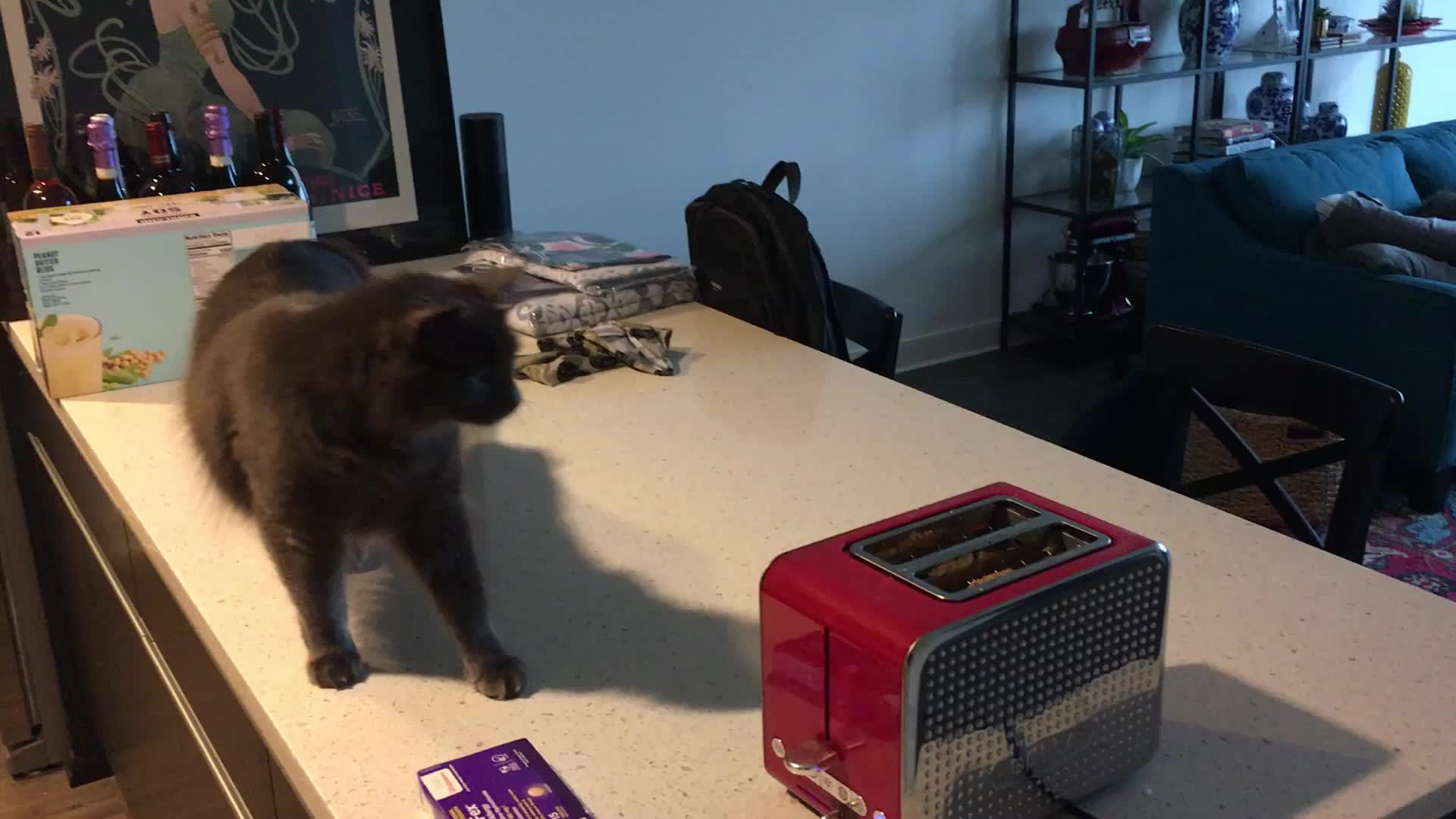 bagel, cat, scared, DASH 9 6 M GIFs