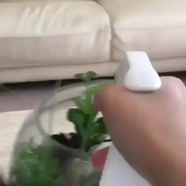 It's important to water one's plants (@archer.the.gsd) GIFs