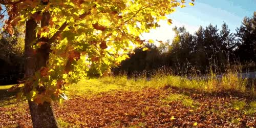 Watch and share Autumn GIFs and Fall GIFs on Gfycat