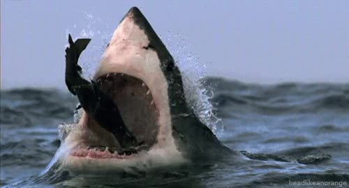 Watch and share Sharks GIFs and Shark GIFs by SKEZ520 on Gfycat