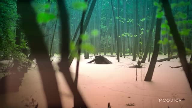 Watch Swamp - Moodica.com GIF by Moodica (@moodica) on Gfycat. Discover more earthporngifs, naturegifs GIFs on Gfycat