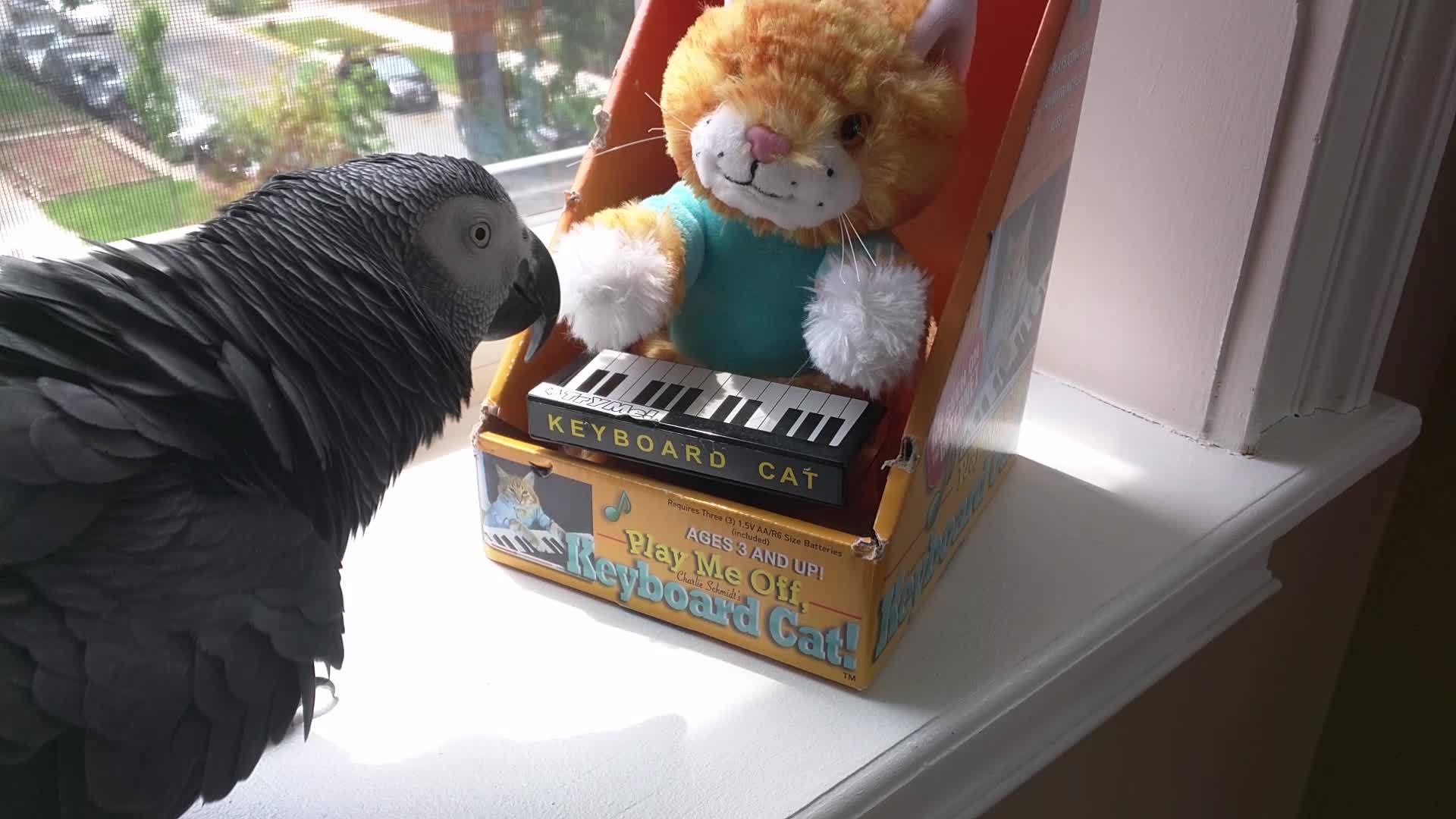 #keyboardcat, partyparrot, Keyboard Cat Party GIFs