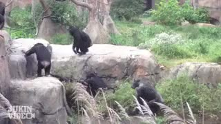 Watch and share Bear Poop GIFs on Gfycat