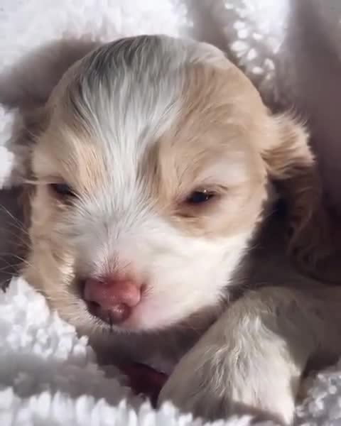 petinsider.com, Sleepy pup GIFs