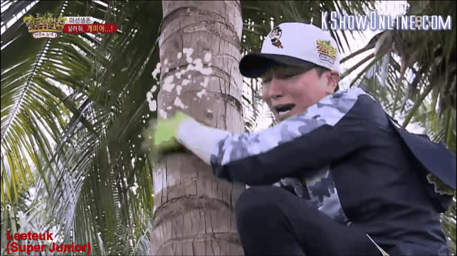 Thả sao Hàn vào sở thú 1 ngày là fan có ngay loạt hình chế dùng hoài không hết