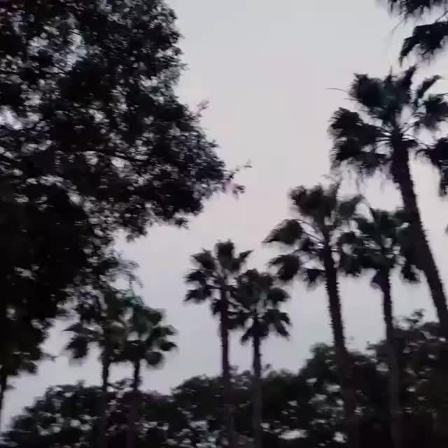 Watch and share Hamilton GIFs on Gfycat