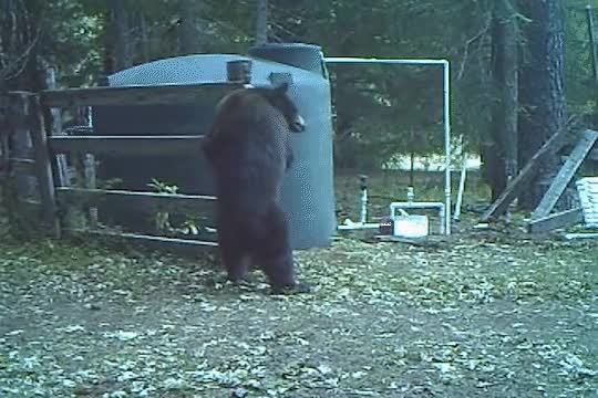 Watch and share The Bear Necessities GIFs on Gfycat