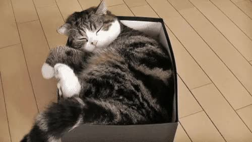 Watch and share 5. Maru Takin' A Hungover Snooze GIFs on Gfycat