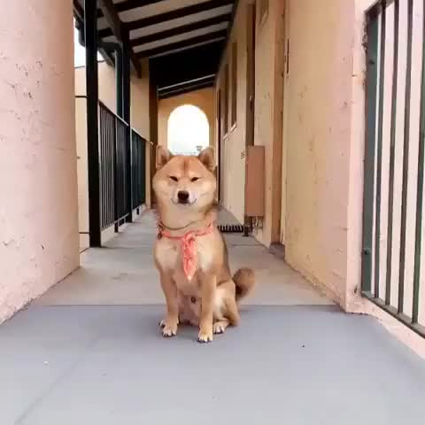 Watch and share Bread GIFs and Doge GIFs by PM_ME_STEAM_K3YS on Gfycat