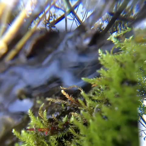 Watch and share Macro Creek, Double Exposure. It's Great To Get My Feet Wet ❤ GIFs by 121gigawatt on Gfycat