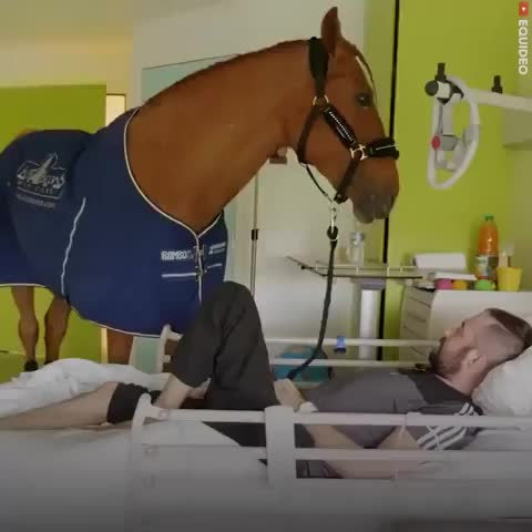 Horse Doctor GIFs