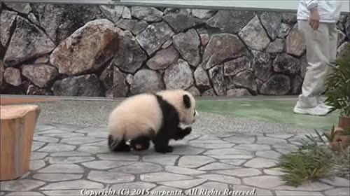 panda GIFs