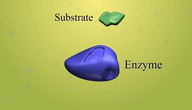Watch enzyme-substrate complex GIF on Gfycat. Discover more enzyme GIFs on Gfycat
