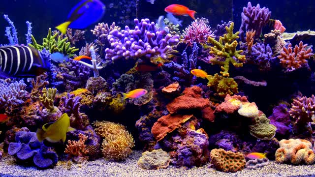 Watch and share ***** THE BEST 4K Aquarium Video ***** GIFs on Gfycat