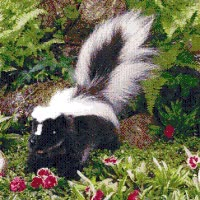 Watch and share Skunk Spraying Animated Gif GIFs on Gfycat