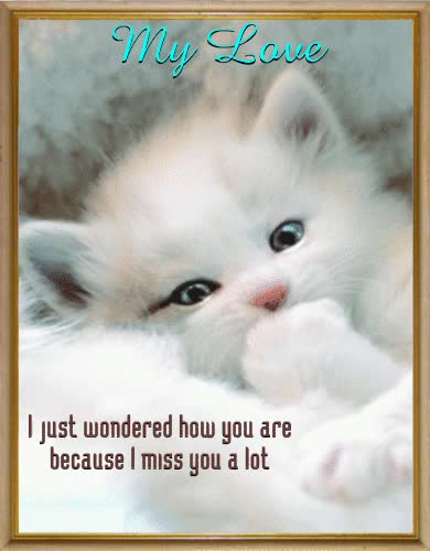 Watch and share Cat Miss You GIFs on Gfycat
