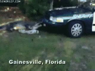 Watch and share Alligator GIFs on Gfycat