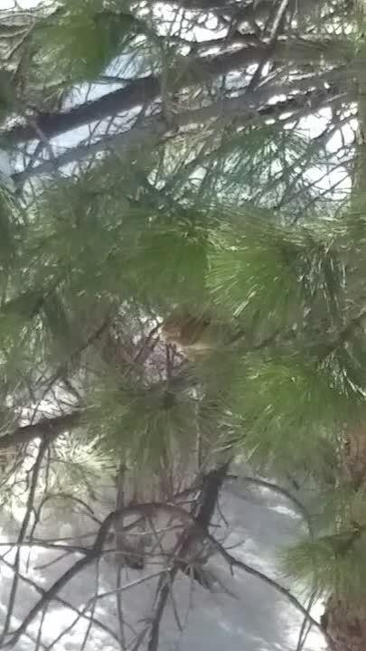 animalgifs, Squirrel Eating Snow GIFs
