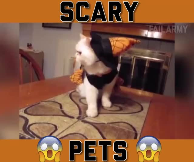 Watch this trending GIF by Koleandra (@koleandra) on Gfycat. Discover more cat, cats GIFs on Gfycat