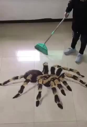 Watch and share Spider  GIFs by LimeLights  on Gfycat