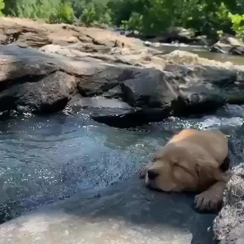 Watch and share Zen Pupper GIFs by tothetenthpower on Gfycat
