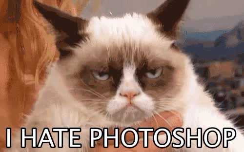 Watch and share Grumpy Cat GIFs on Gfycat