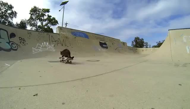Watch and share GoPro: Didga The Skateboarding Cat GIFs on Gfycat
