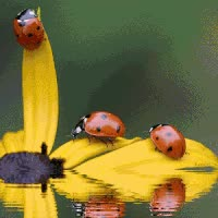Watch and share Animated Insects, Insects, Bugs, Animated Graphics, Keefers GIFs on Gfycat
