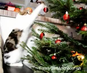 Watch and share If You Enjoyed Watching Cats Knock Inanimate Objects Over, Wait 'til You See Them Animals Vs. Small Children: A Funny GIF Collection. GIFs on Gfycat